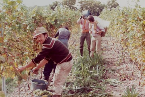1980_Agriculture_(Alfred_Barthassat) (4)