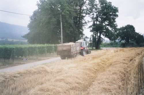 2004_Agriculture_(Alfred_Barthassat) (21)