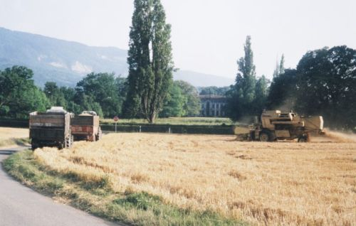 2004_Agriculture_(Alfred_Barthassat) (24)