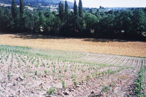 2004_Agriculture_(Alfred_Barthassat) (31)