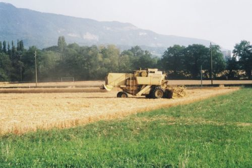 2005_Agriculture_(Alfred_Barthassat) (22)